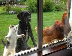 animals-looking-through-the-window-201