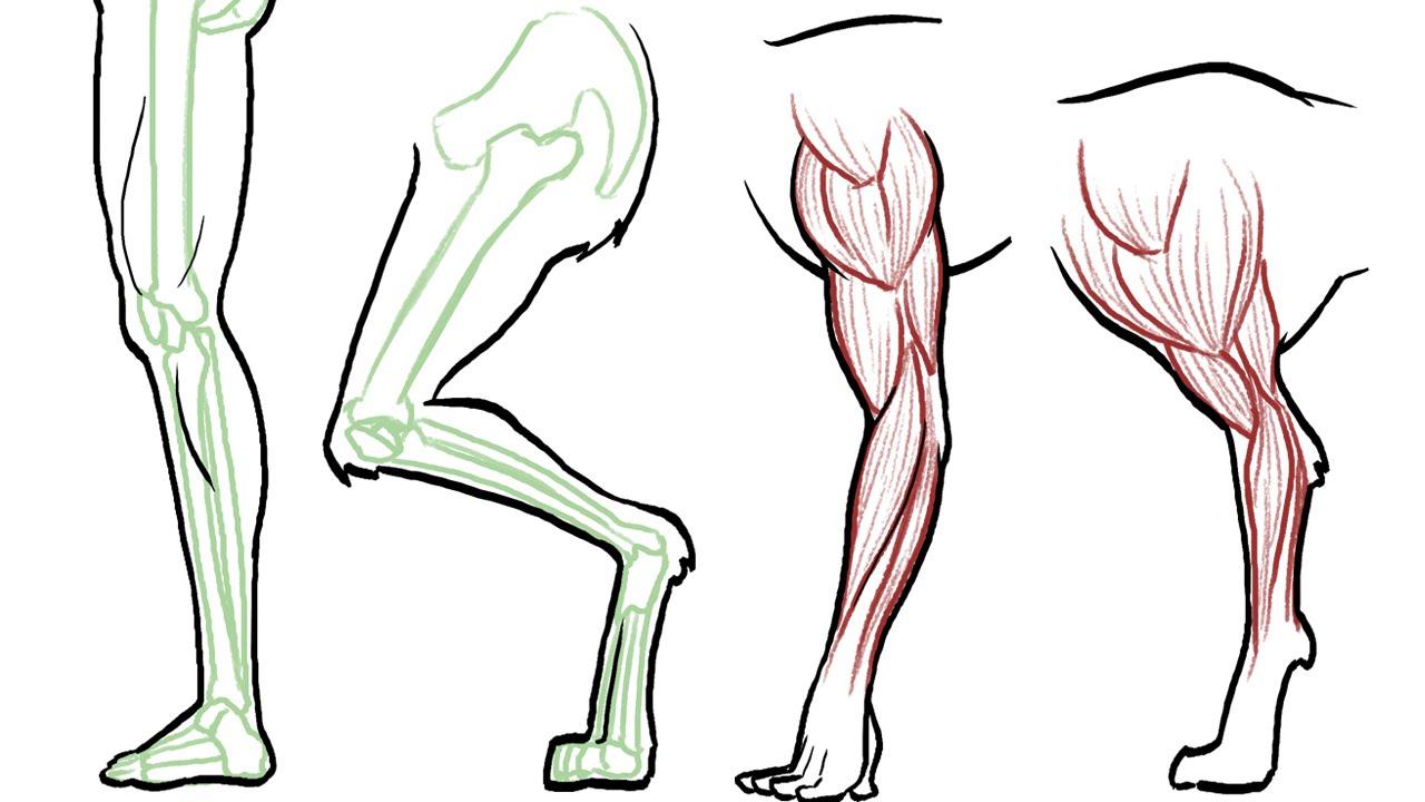 animal leg trivia