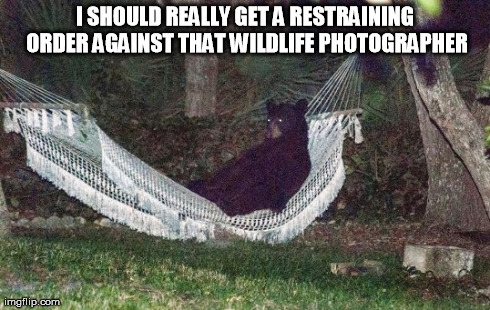 Don't look at this if you don't like ursine puns