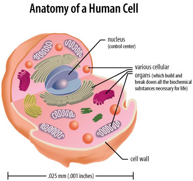 cell trivia